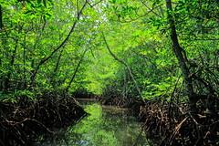 Mangrove Forest | Nusa Lembongan