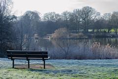 Mill Pond Seat (Rob Jennings2) Tags: frost seat frosty millpond bracknell millpark