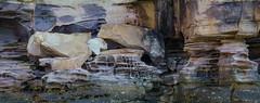MJO-7780.jpg (Matt OZW) Tags: sandstone australia places lindblad geology kimberley hunterriver honeycombweathering kinggeorgeriver nationalgeographicorion