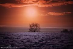 snowy sunset (explore) (Phoenix photo and craft UK) Tags: uk winter sunset england sun snow tree landscape yorkshire scene