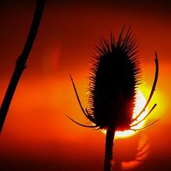 The Sheltering Light (~ * ~ * ~ * ~) Tags: light sunset sky orange black nature backlight clouds contrast canon dark square photography evening licht amber sonnenuntergang sundown dusk himmel wolken dmmerung shelter squared contrejour sheltering lichtbild bridgecamera s5is