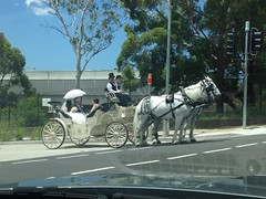 Wedding carriage (highplains68) Tags: australia nsw newsouthwales aus