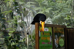 (ddsnet) Tags: travel bird birds japan zoo sony birding cybershot  nippon  birdwatching nihon backpackers       rx10 zoobird hygoken     birdwatchinginjapan