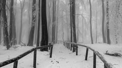 Forest Path (eurodrifter) Tags: winter germany sony taunus nickribaudo eurodrifter sonya7