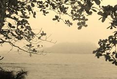 Neblina (luaraprocult) Tags: mist tree praia beach brasil sepia rj natureza neblina rvore spia nuture luaraprocult