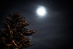 A Moonlit Winter Night (Brian Bogovich) Tags: winter moon snow night pa lensflare westernpa canon70d sigma1835mmf18