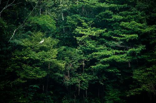 Amazonas Raining Forrest