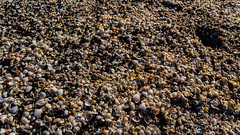 Tiny seashells. (SomethingNature) Tags: ocean sun shells beach nature water norway norge spring skies sunny february tnsberg skjell ringshaugstranda ringshaug