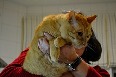 Flavio 15 (Asociacin Defensa Felina de Sevilla) Tags: espaa sevilla gatos felinos animales gatitos adoptar protectora adopciones apadrinar gatosurbanos defensafelina asociacindeanimales coloniasdegatos proteccindegatos activismoporlosanimales