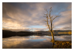Loch Ard – The Trossachs (NorthernXposure) Tags: winter tree landscape calm refelctions thetrossachs lochard