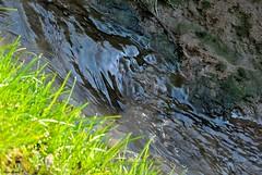 Terra e acqua (Luigi Basilico) Tags: nature water grass river natura land terra acqua torrente