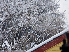 looking out the window (MissyPenny) Tags: snow tree pennsylvania southeasternpa bristolpennsylvania