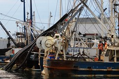 IMG_4591 (Mr.J.Martin) Tags: fishing deepseafishing missmichelle pointpleasant newjersey flounder seabass searobin charterboat sandshark