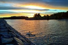 Swans (timo_w2s) Tags: sunset summer finland evening helsinki harbour baltic vuosaari