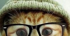 Cute Cat kitten-Pray to god via http://ift.tt/29KELz0 (dozhub) Tags: cat kitty kitten cute funny aww adorable cats