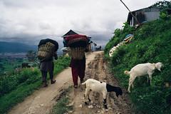 _DSC2551 (wall.in) Tags: nepal trekk