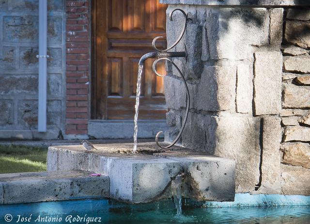 Pajarito en la fuente