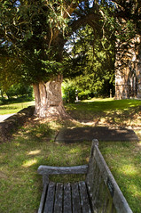 Tree of light (Joe thabet) Tags: outdoor tree light shutter leaves bench church grass