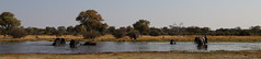Elephant Play Pano (www.mattprior.co.uk) Tags: adventure adventurer journey explore experience expedition safari africa southafrica botswana zimbabwe zambia overland nature animals lion crocodile zebra buffalo camp sleep elephant giraffe leopard sunrise sunset
