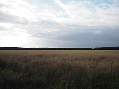 endliche Weite (BCHTLCK) Tags: berlin brandenburg stadtrand kornfeld weizenfeld landschaft