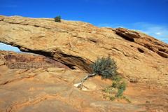 (Jukie Bot) Tags: canyonlandsnationalpark nationalparks southernutah utah travel spring gooutside mesaarch naturalarches