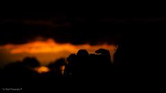 DSC_0237-2 (timmie_winch) Tags: nikon nikond3000 d3000 august august2016 2016 sun sunset sunsetsuffolk sunsetoversuffolkcountryside sunsetovercornfields sunsetovercornfield silhouette 18105mm 18105vr nikon18105mmvrlens shadows golden goldenhour goldenlight elliedunn ellie eleanordunn ells eleanor ellsdunn dunn landscape landscapephotography landscapephotographer naturephotographer naturephotography nature portrait portraitphotography portraiture portraitphotographer portraiturephotography portraiturephotographer portraitofaphotogragher portraitofaphotographer timwinchphotography tim timwinch winch debenham ip14 suffolk