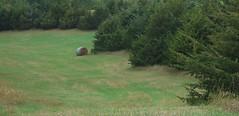 Hay Bale (ConanTheLibrarian) Tags: haybale hay grass green junipers cottonmillpark kearneynebraska buffalocounty nebraska haystack