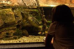 Acuario Agosto 2016 (74) (Fernando Soguero) Tags: acuario zaragoza acuariodezaragoza aragn turismo aquarium nikon d5000 fsoguero fernandosoguero