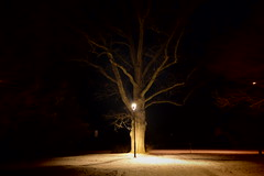 Magic winter (LooreEST) Tags: tree magic dark light cold snow north park winter evening nature shadow shadows wood lonely