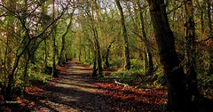Winters Sunshine on Natures Pathway