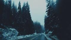 (Yoanna Teneva) Tags: travel friends music mountain snow bulgaria thoughts pines heat pamporovo