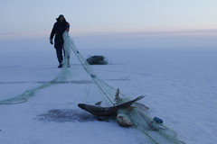 Lifting the net (Camusi) Tags: white lake snow canada net ice frozen fishing fisherman december north lac neige northwestterritories filet pcheur blanc peche nord icefishing decembre yellowknife greatslavelake bombardier gel northof60 territoiresdunordouest grandlacdesesclaves pechesurlaglace