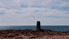 Takeoff (antoniuts) Tags: sea nature freedom mar mediterraneo seagull murcia calblanque