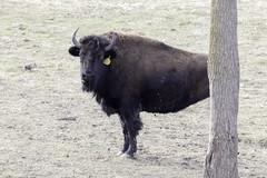 buffalolegless (beckstei) Tags: winter gardens botanical michigan annarbor greenhouse newyearsday matthei