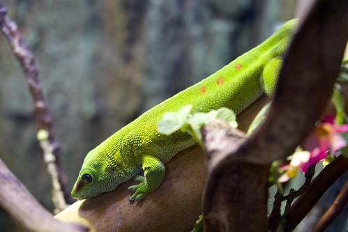 reptile 爬蟲