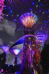 Singapore - Gardens by the Bay - Supertree Grove 2 (Docaron) Tags: show tree garden singapore jardin singapour arbre sonetlumière gardensbythebay supertreegrove dominiquecaron