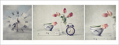 Flores y tiempo para Beln... (pimontes) Tags: flores still d libro bodegn 300 despertador tiempo hss tulipanes salmn pimontes