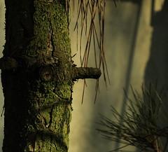 Study the old tree (Sappho et amicae) Tags: light color tree canon minimalism eljkagavrilovi