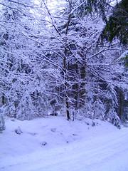 BILD0296 (Monty Jahn) Tags: winter tree bad schwarzwald baum moos badenwrttemberg drrheim neckarursprung schwenninger