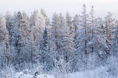 Un peu de soleil ... (sosivov) Tags: trees winter white snow forest landscape sweden