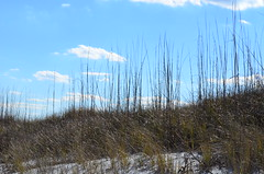 Hierarchy (pjpink) Tags: winter beach coast sand dunes january northcarolina carolina grasses wrightsvillebeach 2015 blowingsand pjpink