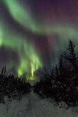 Aurora Feb 16, 2015 (nwtarcticrose) Tags: lights pond over aurora nightsky northwestterritories northern northernlights auroraborealis yellowknife northerncanada オーロラ 북극광 족 나이프 yellowknifeyellowknifenwtnight skygreenyellowredval 옐로 イェローナイフ