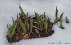 March 11, 2015 - Signs of spring in Thornton. (Michelle Jones)