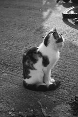 Profiler (tiki.thing) Tags: monochrome cat