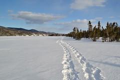 Journe de plein air (pascal_roussy) Tags: winter snow canada landscape hiver qubec neige paysage gaspsie forillon gasp