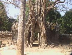 Jungle Temple Angkor Wat