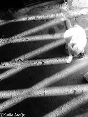 (floydianalost) Tags: street brazil blackandwhite bw cats black france art branco brasil loving cat photoshop fun artwork flickr all foto shadows sad photos amor side picture like sombra gatos pic photographic preto follow pinhole adventure gato cear scape pretoebranco catz peb bew likes amador aventura lightroom silhueta followme lovecats lovecat coment lovephoto picpet followyouback