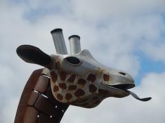 Cylinder Ears (mikecogh) Tags: sculpture tongue head ears spots giraffe publicart glenelg cylinders chrismurphy
