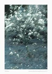 Shibui (www.damientaylor.co.uk) Tags: shibui japanese tree blossom sakura fineart multipleexposure intentionalcameramovement me icm colour color colourful vibrant