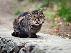 I'm not sure I'm crazy... (Yalitas) Tags: pet cats cat canon crazy kat feline chat kitty gato felino katze katzen kot kedi kass gatta streetcat kotka  kocka  katte  katzchen kottur